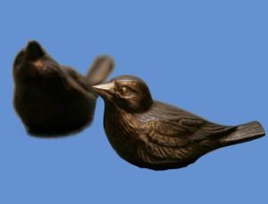 Koparspörfuglar littlir